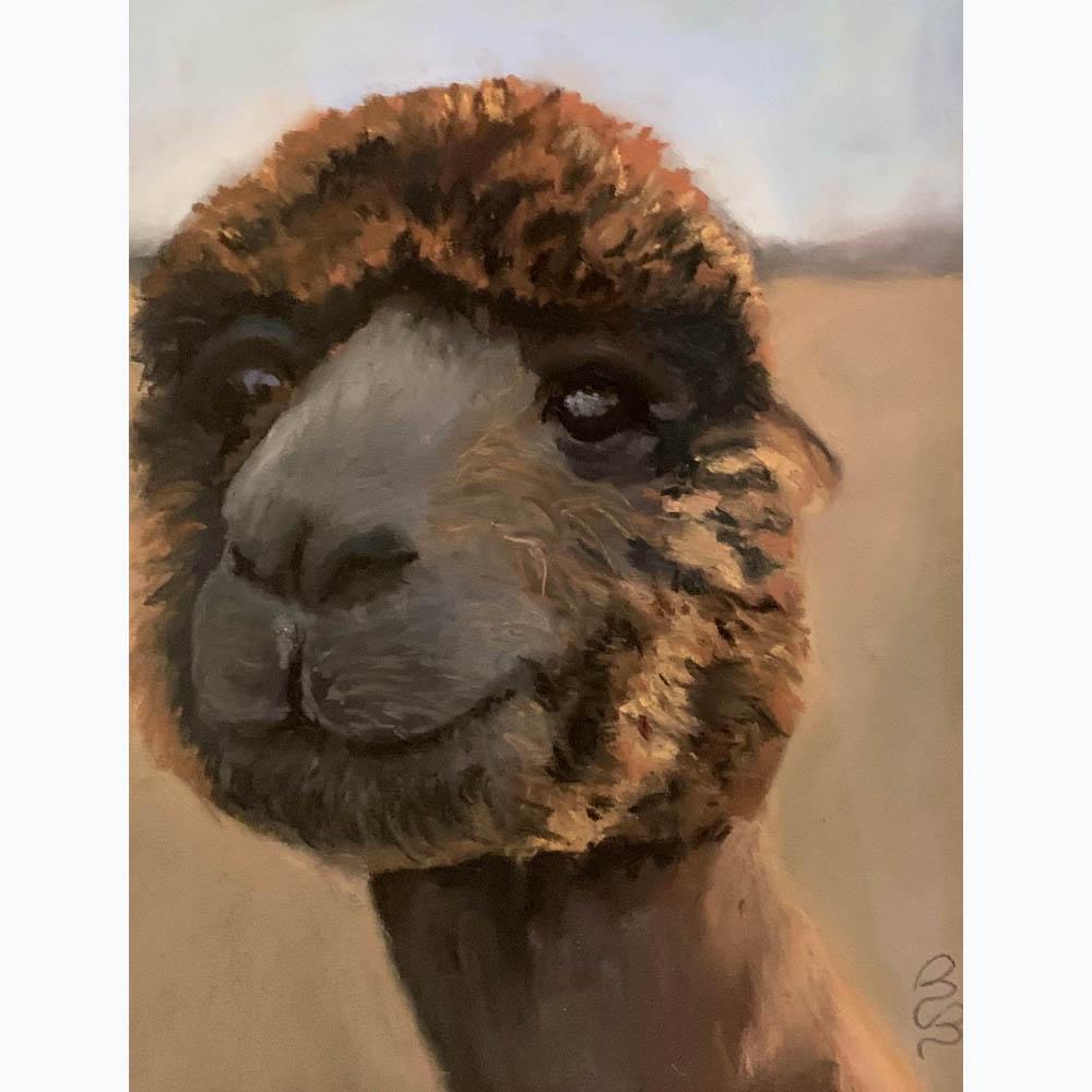 Carlson-Bradshaw_Alpaca